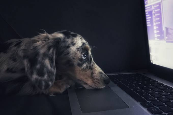 cachorro computador triste